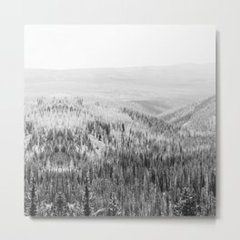 pine forest black white wooded area nature landscape print Metal Print