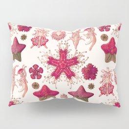 Ernst Haeckel - Scientific Illustration - Asteroidea (Red) Pillow Sham
