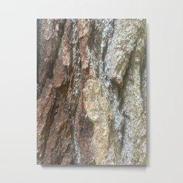 Adirondack Bark Metal Print