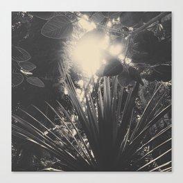 Solar plants Canvas Print