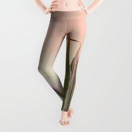 Agave in the Garden on Pastel Coral Leggings