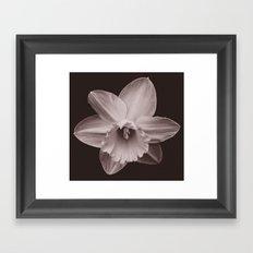 Daffodil 1 Framed Art Print