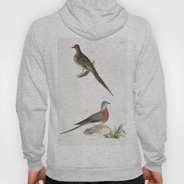 166 Carolina Turtle Dove (Ectopistes carolinensis) 167 Wild Pigeon (Ectopistes migratoria)  from Zoo Hoody
