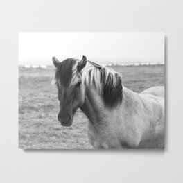 Pony Up Metal Print