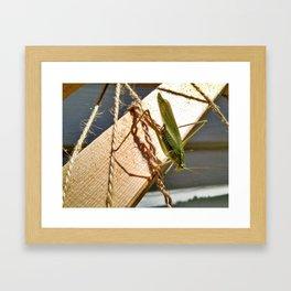 Katydid on wooden trellis Framed Art Print
