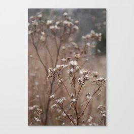 Soft White Canvas Print