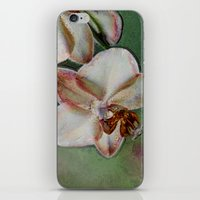 orchid iPhone & iPod Skins featuring Orchid by LoRo  Art & Pictures