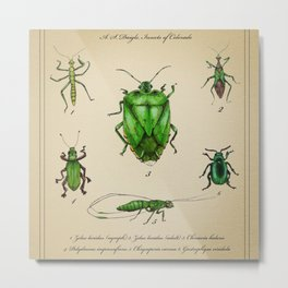 Vintage Entomology Plate, Green Insects Metal Print