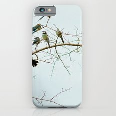 Birds of a Feather Flock Together iPhone 6s Slim Case