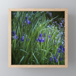 Irises Framed Mini Art Print