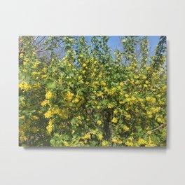 currant flower Metal Print