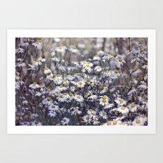 Wild Daisies Field 4130 Art Print