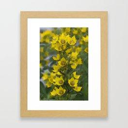 Finger Lakes Flora 2 Framed Art Print