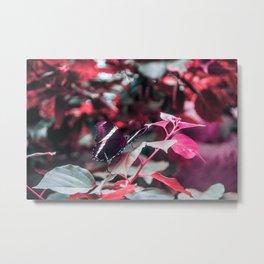 Butterfly - P I N K Metal Print
