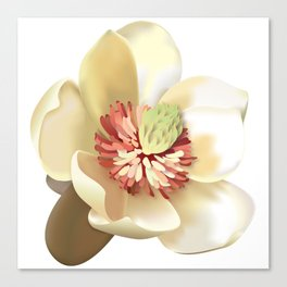 Magnolia! Canvas Print