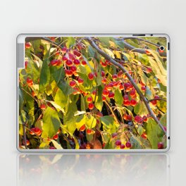 Bright red berries on a tree Laptop & iPad Skin