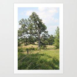 This Old Tree Art Print