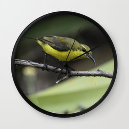 Olive-Backed Sunbird Wall Clock