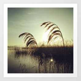 Reed fever Art Print