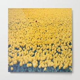 Tulips field #3 Metal Print