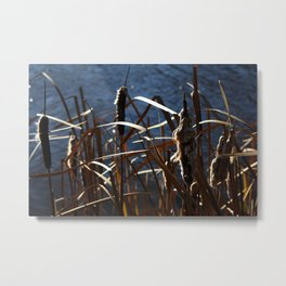 Fall Withers  Metal Print