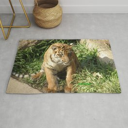 Young Tiger Rug
