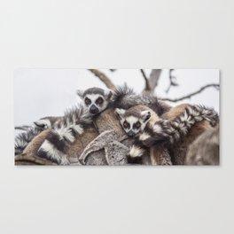 Lemur catta animals Canvas Print