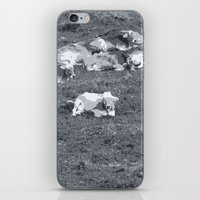 cows iPhone & iPod Skins featuring Cows by Mr and Mrs Quirynen