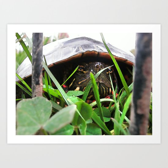 The Painted Turtle Art Print