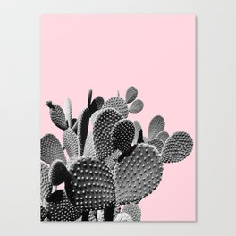Bunny Ears Cactus on Pastel Pink #cactuslove #tropicalart Canvas Print