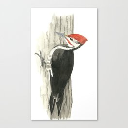 Pileated Woodpecker - Watercolor Canvas Print