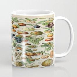 Fruits Vintage Scientific Illustration French Language Encyclopedia Lithographs Educational Coffee Mug