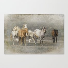 A Band of Horses Canvas Print