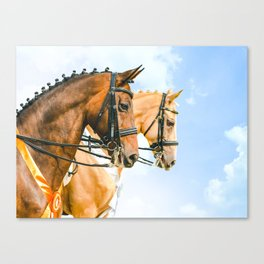 Side view portrait of two braided horses, blue sky as a background. Canvas Print