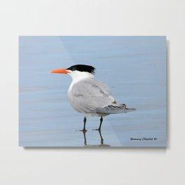 An Elegant Tern Metal Print