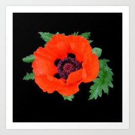 Orange oriental poppy on black Art Print