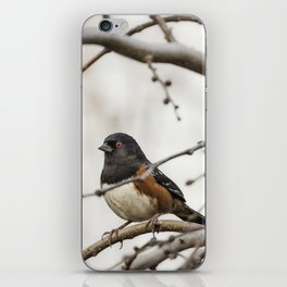 Spotted Towhee iPhone Skin