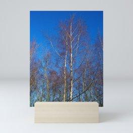 Silver Birch Trees in Winter Sunlight Mini Art Print