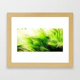 Green Swaying Grass in Summer Breeze Framed Art Print