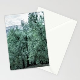 old olive trees in Tuscany, Italy. Stationery Cards