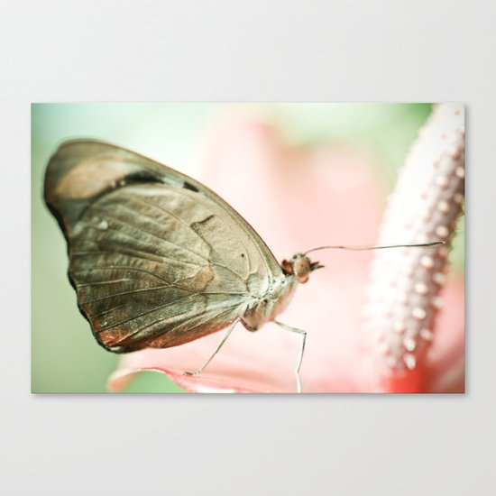 A Quiet Lullabye Canvas Print
