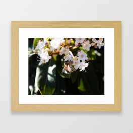 Bee in Late Winter (2 of 2) Framed Art Print