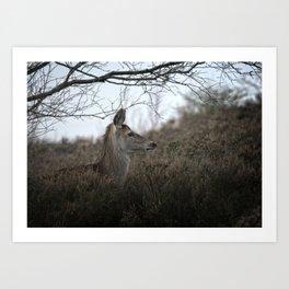 Camouflage Wild Red Deer Art Print