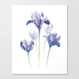 Watercolor iris print Canvas Print