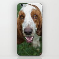 the hound iPhone & iPod Skins featuring Hound by RaviusKiedn