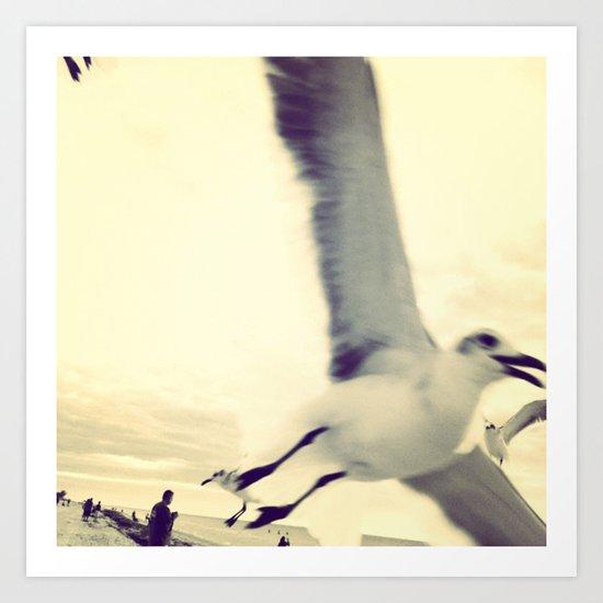 Gull, closeup  Art Print