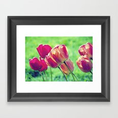 Lighted Tulips Framed Art Print