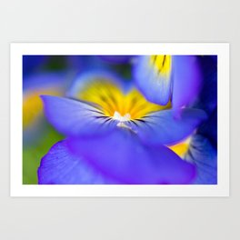 Pansy Abstract Art Print