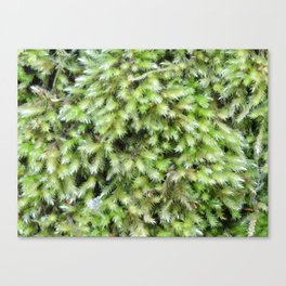 TEXTURES -- Moss on a Tree Trunk Canvas Print