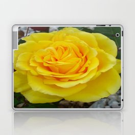 Head On View Of A Yellow Rose With Garden Background Laptop & iPad Skin